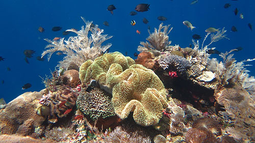 cruises for scuba divers in Alor Indonesia